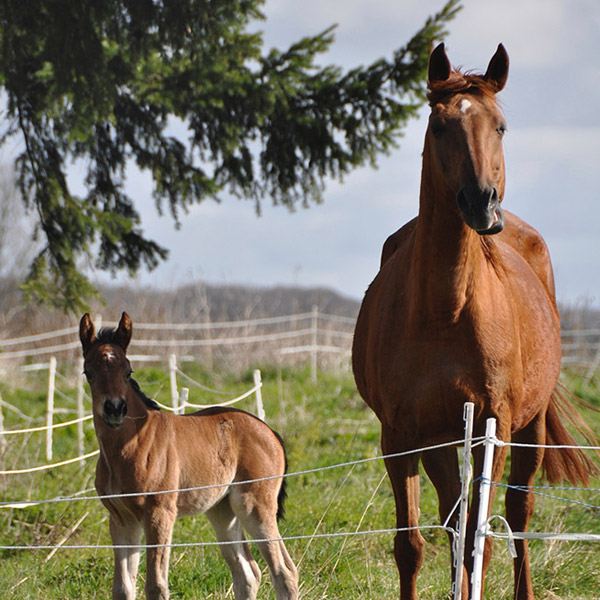 chevaux-animaux